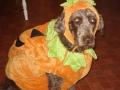 mocha_pumpkin