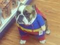 simon-superman